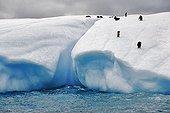 Penguins on an iceberg Antarctica