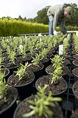 Man labelling nursery plants