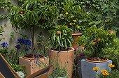 Dwarf fruit trees on a garden terrace