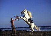 Rider rear up his horse long gray mane