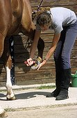 Rider cleaning the foot of his horse  France