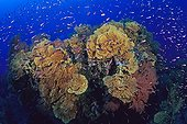 Coral pushing the edge of the island of Lifou Oceania