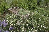 "Vasque stone surrounded by Erigeron France ; Garden : ""Jardin du fond de l'or"" Mr Lubet"