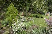 "Bald Cypress and Dappled Willow ""Hakuro Nishiki"" France ; Garden : ""Jardin du fond de l'or"" Mr Lubet"