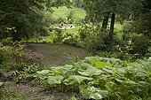 "Japanese sweet coltsfoot ""Nishiki-buki""  in terrace garden ; Garden : ""Jardin du fond de l'or"" Mr Lubet"