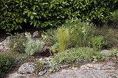 "Euphorbia Thymus Stipa Hypericum in Rock border France ; Garden : ""Jardin du fond de l'or"" Mr Lubet"
