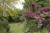 """Garden : """"Jardin du fond de l'or"""" Mr Lubet"""