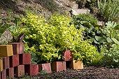 "Albury purple ""Golden Beacon"" Jardin du fond de l'or France ; Garden : ""Jardin du fond de l'or"" Mr Lubet"
