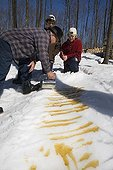 Preparation of a sweet from maple syrup Quebec ; Locality: St Mathieu du Lac. <br>The maple taffy - enjoyed on a wooden stick - is a highly prized delicacy in winter.