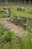 Overview of a mulched kitchen garden in spring Provence