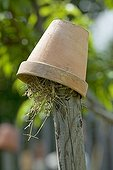 Shelter for Earwigs in a garden Provence