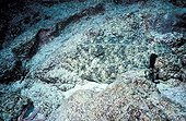 Flowery flounder camouflaged on a coral reef Galapagos ; Champion of the homochromie