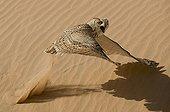 Grand Duke of taking off desert sand, United Arab Emirates