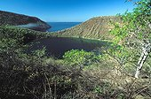 Darwin salty lake in Tagus Cove Galapagos ; Site : West coast of Isabela island<br>Raising a dozen meters above sea level