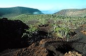 Lava flow from Darwin volcano in Tagus Cove Galapagos ; Site : West coast of Isabela island