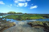 Field of algae found at low tide Galapagos ; Site : Fernandina island<br>At low tide, the marine iguanas come to feed.<br>