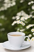 Feverfew herb tea in a cup France