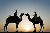 Silhouette of two camels with drivers at sunset India
