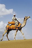 Camel with driver walking Rajasthan India