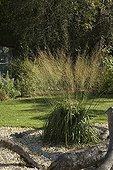 Purple moorgrass at Jardin du fond de l'or