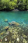 Recif de corail et forêt tropicale primaire Sulawesi ; Localité : route de Lembeh.