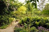 Ostrich fern and Bellflowers and rose-tree 'Jean Girin' ; Marguerite Garden