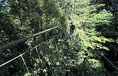 Monkey bridge through the canopy of the Nouragues forest