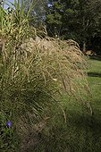 Silver Spike Grass at Jardin du fond de l'or in Gironde