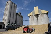 Silos d'une cooperative agricole pendant la moisson ; Stockage de l'orge en vrac au pied des silos en cas d'engorgement au moment de la moisson. Chargeur arrangeant le tas