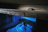 Mouse galloping in the attic and person asleep France