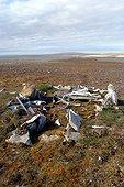 Ruin of Paleo-Eskimo house Bathurst Island Canada ; <br><br>