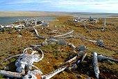 Ruins of Paleo-Eskimo houses Bathurst Island Canada ; <br><br>
