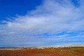 Village paleo eskimo in ruins on Bathurst Island Canada ; Village paléo eskimo en ruines sur l'île de Bathurst Canada