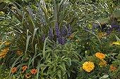 Annual flowerbed in a garden