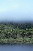 Mist over the marsh-side jungle marsh French Guiana