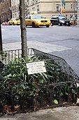 Panneau contre les déjections canines New York