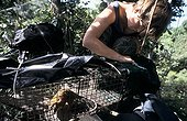 Caging of a small mammal French Guiana ; Mission led by Daniel Guiral from IRD in Kaw swamp.