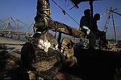 Chats dormant et se toilettant dans un port de pêche Kochi