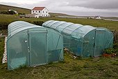 Domestic greenhouses Darwin East Falkland Falkland Islands