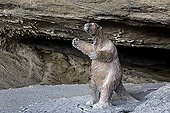 Statue of Mylodon listai in a cave Chilean Patagonia