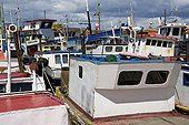 Port de pêche avec des petits chalutiers sur la côte Chili