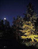 Garden illuminated during night