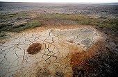 Drought in Arctic Bathurst island Canada