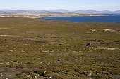 Overview of a sandy moor on Pebble Island Falkland Islands