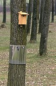 Nichoir on a trunk with anti-predator system France ; @ Protection against predators
