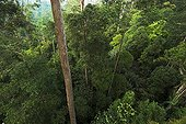 Forêt primaire de Bukit Bangkirai Kalimantan Bornéo