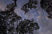 Lune au-dessus de la forêt de Bukit Bangkirai Bornéo