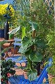 Tarovine on a garden terrace