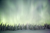 Aurora borealis on taiga covered with snow Finland