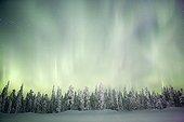 Aurore boréale sur la taïga couverte de neige Finlande